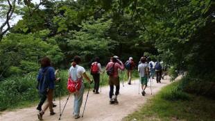 4月5月の森林植物園ウエルネスウォーキングの案内 参加者募集中のイメージ